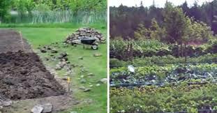 growing an heirloom organic vegetable garden start to finish