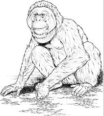 apes coloring pages coloring pics art