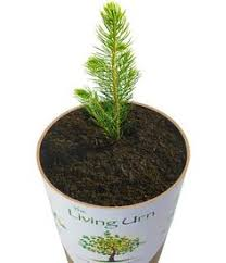 cremation tree the living urn grow a living memory tree from your pet s