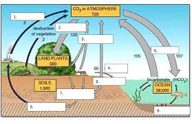 the carbon cycle worksheet free worksheets library download and
