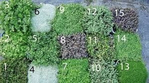 13 of the best new zealand native ground cover plants stuff co nz