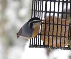 backyard bird shop news u0026 updates backyard bird shop