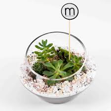 succulent kits terrarium singapore by masons home decor arguably the best