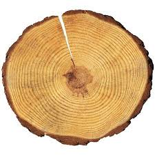 tree rings pictures images Tree rings stock photos royalty free tree rings images jpg