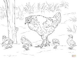 coloring page of a chicken simple design chicken coloring pages chicken coloring pages free