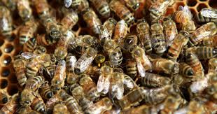 iowa company u0027s u0027100 pure u0027 honey laced with weed killer lawsuit says