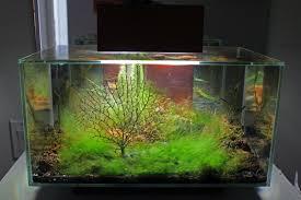 Wohnzimmertisch Aquarium 10 Gallon Planted Radius Curved Corner Glass Aquarium Planted