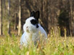 Rabbit Repellent For Gardens by How To Keep Rabbits Out Of Your Garden Hgtv