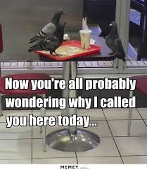 Meme Table - bird memes funny bird pictures memey com