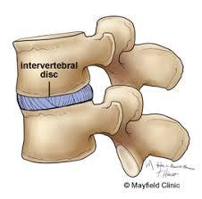Anatomy Of Vertebral Body Spine Anatomy Anatomy Of The Human Spine