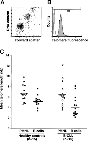 The B Telomere Length And Telomerase Activity Delineate Distinctive