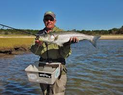 cape cod fishing report 9 27 reel time comreel time com