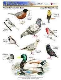 Audubon Backyard Bird Count by Bird Counts U2013 Palouse Audubon Society