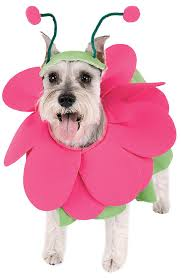 Big Dog Halloween Costume 5 Dog Halloween Costumes
