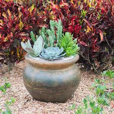 container gardening ideas with succulents costa farms