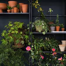 emily thompson flowers assorted potted plants plants