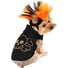 Yorkie Halloween Costumes 45 Halloween Costumes Pets Images Pet