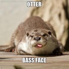 Otter Meme - otter bass face make a meme