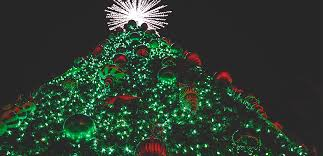 christmas trees christmas tree trail traditional trees explorebranson
