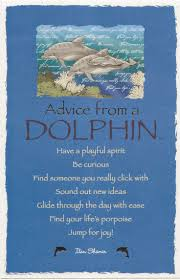 best 25 dolphin quotes ideas on pinterest keep calm quotes