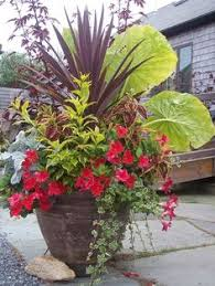 Tropical Potted Plants Outdoor - planting in large containers decorative planting in large