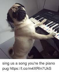Piano Meme - sing us a song you re the piano pug httpstcom4xrin7uks piano meme