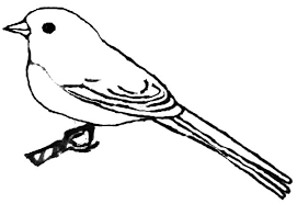 kids draw of junco bird coloring pages batch coloring
