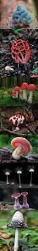 best 25 poisonous mushrooms ideas on pinterest fungi mushroom