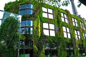 Wall Gardens Sydney by Advice For Creating A Healthy And Beautiful Green Wall From Its