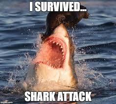 I Should Buy A Boat Meme Generator - 8 best my memes images on pinterest meme caption caption and