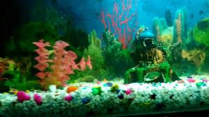 fish aquarium home india youtube