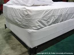 Can Bed Bugs Live On Cats Bed Bugs Entomology