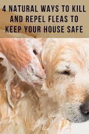 7 best doggies images on pinterest dog stuff diy dog and dog cat