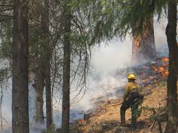 Delaware forest images Update on delaware forest service wildfire crew in california jpg