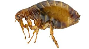 Bed Bug Exterminator Detroit Insect Removal And Pest Control Services Full Service