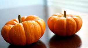 small pumpkins be tiny pumpkins in suzi s words