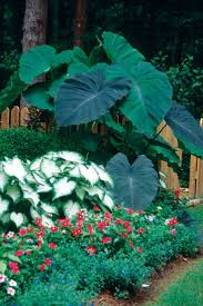 228 best garden ideas images on pinterest gardening plants and