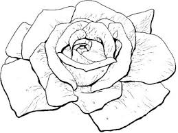 free printable rose coloring pages red rose picture of fluffy