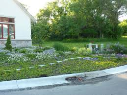 native minnesota plants kristin u0027s no lawn yard in minnesota fine gardening
