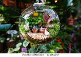 mini garden glass plant terrarium stock photo 538665667 shutterstock