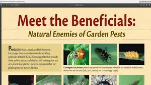 Good Garden Vegetables by Which Are The Beneficial Predatory Insects For Your Vegetable