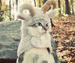 Sheep Dog Costume Halloween Ewok Dog Costume