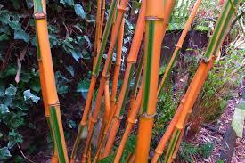 alternative eden exotic garden late february colour in the garden