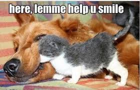 Dog Teeth Meme - february is pet dental month furkids