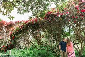 Fort Bragg Botanical Garden Derek Engaged Mendocino Botanical Gardens Fort Bragg