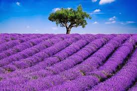the most beautiful flower plantations and parks of the world