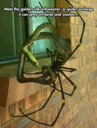 Cute Spider Meme - banana spider eating a snake the meta picture