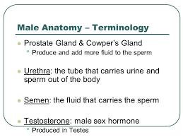 Human Anatomy Words Human Growth And Development Male Anatomy Female Anatomy October 8