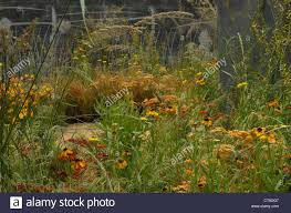 soft orange and yellow planting against an etched glass wall in