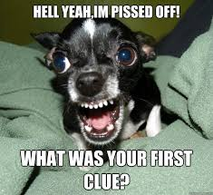 Pissed Off Meme - hell yeah im pissed off what was your first clue chihuahua